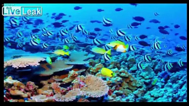 The Great Barrier Reef - Reef Systems Greatest On Earth