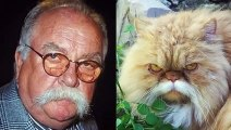 Des chats marrants