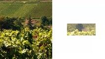 FUN MOOC : Open Wine University - Université de la vigne et du vin pour tous