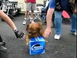 Dog protecting his Budlight Beer