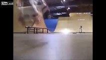 Dog rides a skateboard