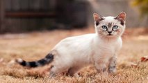 funny cat videos,cat facts, cat for sale, cat games, cat rescue, cats, cats and dogs,