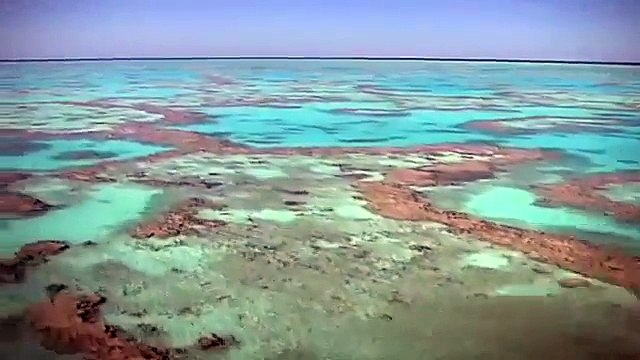 The Great Barrier Reef is UNDER THREAT, Join the Fight for the Reef!!