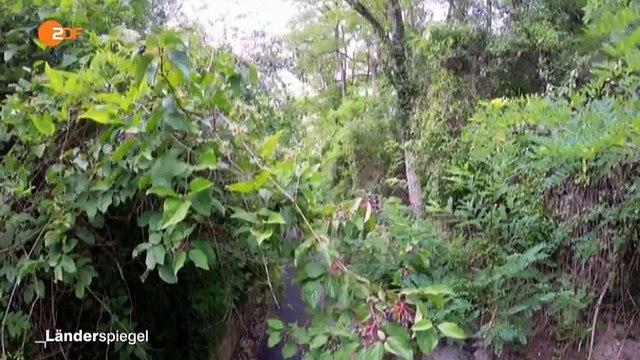 Asphaltweg durchs Biotop