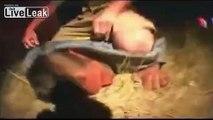 STEVE IRWIN GOES BUM HUNTING    ( ̲̅ ̲̅ ̲̅ ̲̅[̲̅ ̲̅]̲̅ ̲̅ ̲̅ ̲̅ )