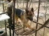 Dog can work on waterwheel to pump water up from river
