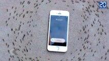 Le comportement des fourmis quand un iPhone sonne (fake) ! - Le rewind du vendredi 4 septembre 2015 !