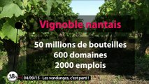 Emission spéciale Vignes et Vendanges à Gétigné