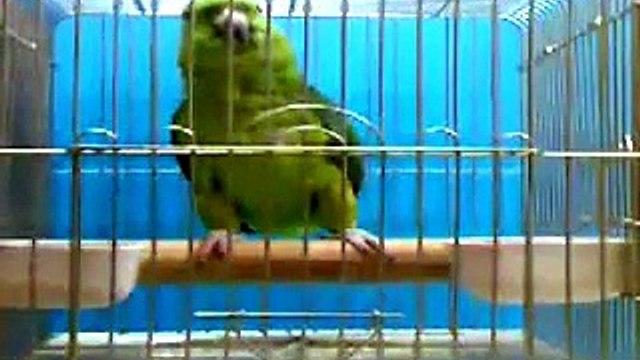 Subhan Allah Parrot Reciting Holy Quran