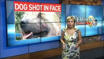 Dalton Man Charged with Shooting Dog