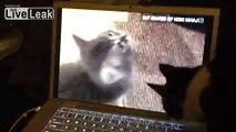 Internet Cat Rebels Against Internet Cats