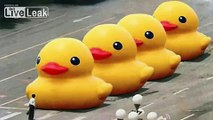 Big Yellow Duck Banned on Chinese Weibo | VLOG | China Uncensored