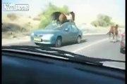 Horse tramples car
