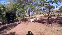 Gary the goat nearly gets fed to a croc due to an All-Up bet.