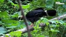 El libro rojo, Especies amenazadas - Aves sagradas