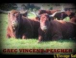 Grand succès du GAEC VINCENT-PESCHER au Concours Salers 2015 Saint Amand Roche Savine / Salers Breeding Zucht Ganado