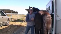 Horse Scaring- Sacking Out & Fear- Messing with other Horses- Pregnant Mare- Rick Gore Horsemanship