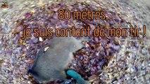 Chasse en Battue de Sangliers  -  Multi-Caméras - Chasse HD