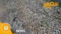 كارثة في ميناء رادس : خروج كميات هائلة من الأسماك !!!