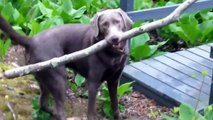 пес решил головоломку