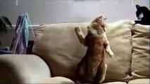 Танцующий кот ! Чудеса ! смешные коты! смешные животные!  / fun! funny animals!  funny cats! humor!