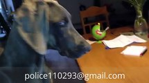 Dog - Cat: funny cats - dog videos, full - funny clips (dog - cat videos) p 16