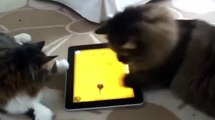 Funniest Cats - funniest cats videos | wondering cats