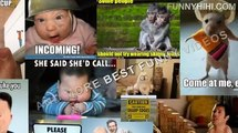 Funny Cats   Funny cat Videos   Funny Animals compilation   Kitty Cat Videos