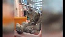 Лежите и расслабтесь !))смешные коты! смешные животные!  / fun! funny animals!  funny cats! humor!