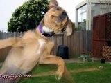 Photobomb Animals! @ Funny Animal Videos   Funny Pet Videos, Funny Cat Videos, Cute Pets