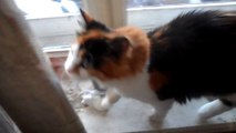 прикол смешная кошка кошка