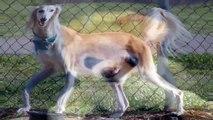 doberman rescue, dog adoption, dog and cat, dog breeders, dog cat,