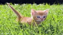 cats and dogs, dogs, feral cat,cats and dogs, cats for adoption,