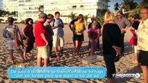 Liberación de Tortugas en Puerto Vallarta - México