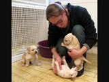 Sauvetage chiens à Montpellier par Amis des Bêtes Aix les Bains