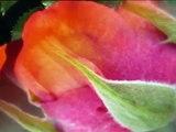"Edward Elgar ""Salut d'amour"" for violin & piano,Op 12, Kyung Wha Chung Violin"