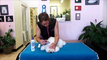 Tampa's Best Pet Dog Goomer: Combing your Bichon Frise and removing knots.