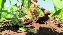 رواندا: مناخ متغير