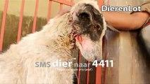 Stichting Dierenlot - Tv spot 2014 60 sec sms