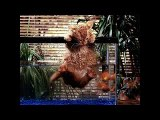 Funny Cats Fights   Cat Videos Funny 2014   Funny Cats Videos  Funny Animal Vide low