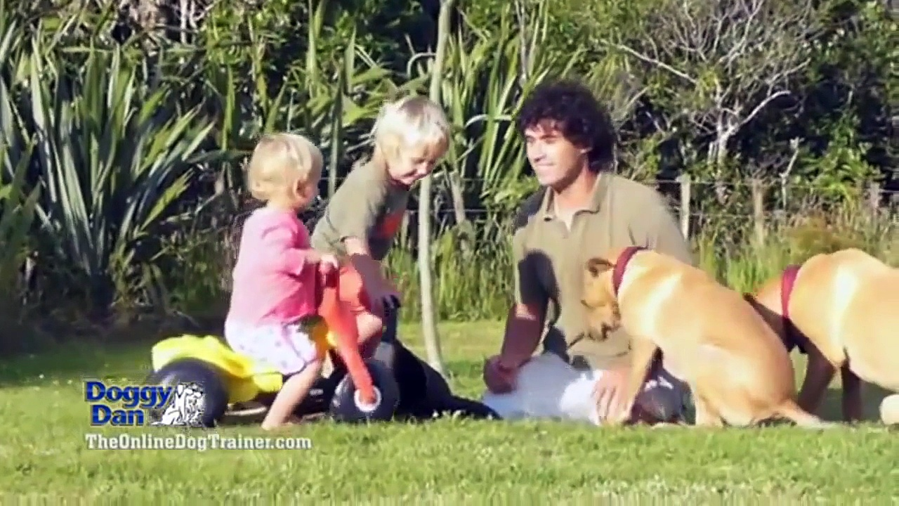 The Online Dog Trainer | Online Dog Training | Train Your Dog Online | Train Your Pet Dog