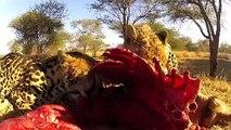 On Safari with GO PRO HERO 2 and WILD4 Photo Safaris - SOUTH AFRICA