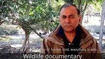 animals documentary   animals documentary national geographic   wildlife documentary