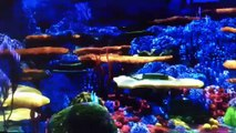Finding Nemo Barracuda  Normal Fast And Slow (edited with splice video editor app)