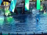 "SeaWorld Killer Whale Video - ""Something Far Greater"" Shamu, Believe"