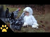Baby in a Lamb Costume Confuses Chickens