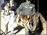 yadkin county - Perros en perreras gaseados - Gassed dogs killed