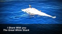 Great white sharks eat Whale, white sharks