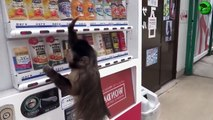 Funny Videos - I Like To Move It - Monkey Dance!! LOL xprovideo