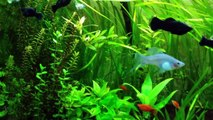 Mein Aquarium 320l mit Guppys, Mollys, Platys, Panzerwelsen und Garnelen